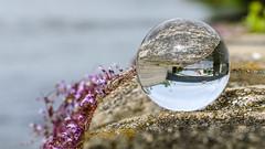 Eiserne Brcke // Mit der Kugel durch Regensburg (seyf\ART) Tags: town stadt refraction regensburg ratisbon crystalball glaskugel