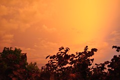 glow after the rain (ladybugdiscovery) Tags: clouds golden evening glow dusk goldenhour