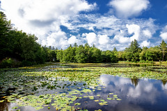 Forrest lake (Jim Skovrider) Tags: sky nature water denmark nikon d750 fullframe tamron danmark nordjylland colorefexpro niksoftware adobephotoshoplightroom nikonfx sp2470mmf28divcusd nikonfxshowcase nikond750