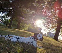 chillin (Elizabeth Gray1) Tags: nature sunlight sun outdoor pet pets light rays trees puppy puppies dalmatian