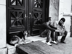 Street 166 (`ARroWCoLT) Tags: streetart kpek kap taksim istanbul trkiye trkei turkey street sokak people summer samsung nx mini nxm photography dof outdoor siyahbeyaz art bw blackwhite monochrome black white blackandwhite arrowcolt nxmini pattern door vintage dog straydog streetseller 17mm f18