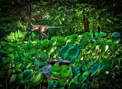 Zilker Botanical Garden, Austin TX (sbmeaper1) Tags: hdr austin zilker botanical garden prehistoric