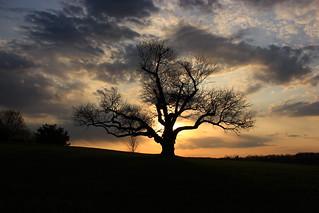 The Lone Apple Tree