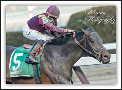 March wins the Bay Shore (EASY GOER) Tags: horses horse ny newyork sports race canon track running racing aqueduct 5d athletes races thoroughbred equine thoroughbreds markiii equines horsesequine equinw