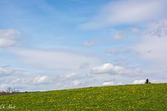 Le ciel de St Pierre (Ch.Neis) Tags: sun france tree nature grass birds soleil reflex nikon natur 23 nikkor sonne arbre baum creuse afs vogel oiseaux herbe limousin dx verlorene lostplaces d5200 55300mm photographedandcopyrightbychristophneis stpierrecherignat lieuxperdus orte3