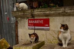 Istanbul (Luciano ROMEO) Tags: panorama istanbul mercato gatti bazar moschea turchia