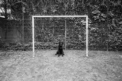 waiting for the ball (mahohn) Tags: bw dog monochrome goal hamburg hund tor 32 rocco fujix10
