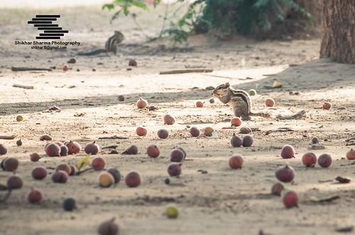 Praying squirrel :)