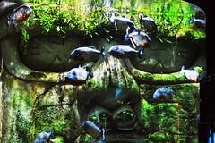 Aquarium, Antwerp