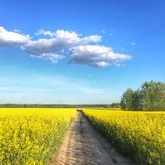 Blue And Yellow Ukraine (naum_23) Tags: day mostlysunny