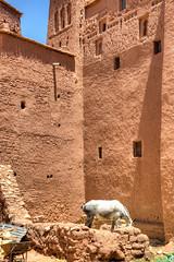 076 (Michael Williams Photography) Tags: atlasmountains morocco marrakech approved ouarzazate saharadesert atbenhaddou doorofthedesert siteofnumerousmovies exampleslawrenceofarabiajewelofthenilelasttempationofchristgladiatorusedinpartsofgameofthrones
