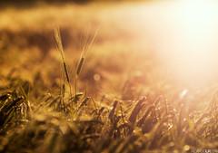 Dancing with the light (Photographordie) Tags: light sunset luz atardecer bokeh 85mm olympuspenepm2 samyangasphericalif85mmf14