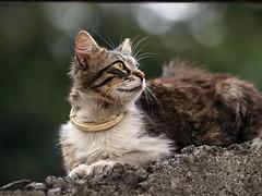 Street cat 135 (Yalitas) Tags: pet cats cat canon kat feline chat kitty gato felino katze katzen kot kedi kass gatta streetcat kotka  kocka  katte  katzchen kottur catmuzzle