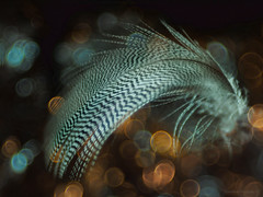 Nebula Zebra_c (gnarlydog) Tags: abstract nature bokeh feather bubbles vintagelens projectionlens adaptedlens