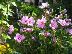 IMG_9645 (wilhelm.haardt) Tags: antjes blumen peniscola frheidi antjesblumenpracht