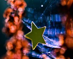 Star of Nature. (Neal.) Tags: star macromondays macro stars plant nature blue