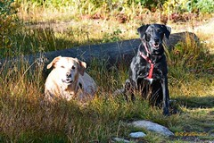 September 4, 2016 - These Thornton dogs enjoy a trip to the mountains. (Ed Dalton)