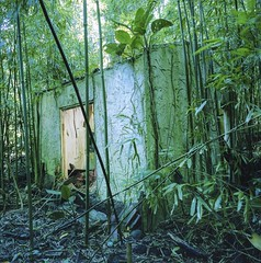 Abandoned Jungle (Ca$hreno) Tags: mamiya mamiya6 film mediumformat velvia vivid colorful jungle abandoned abandonedhouse hawaii goldenhour lighting green bamboo 6x6 squareformat rangefinder 120 fujifilm scenery abandonedplaces bambooforest filmcamera filmphotography epsonv700 beauty beautiful analog
