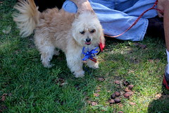 Lucky (smileforyadira) Tags: people rescue dog love animal animals fun losangeles furry friend canine blessing lucky archie paws shelter gus bestfriend rescued bff k9 olvera fido olverastreet furryfriend shelterdog blessingoftheanimals2015