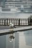 (feel_so_happy) Tags: bird 鳥 かもめ 晴海埠頭