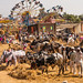 The biggest cattle fair of the year, Rajur, India