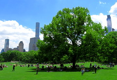 The Tree (Keith Michael NYC (2 Million+ Views)) Tags: nyc ny newyork centralpark manhattan