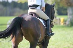IMG_0188 (dreiwn) Tags: horse horseshow equestrian horseback reiten horseriding showjumping gelnde eventing marbach reitturnier vielseitigkeit reitsport pferdekopf pferdesport springreiten gelndestrecke eventingmarbach