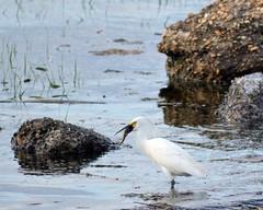 Cliffwood Beach New Jersey (Robert Scifo) Tags: ocean summer beach birds newjersey spring nikon wildlife shore avian southjersey cliffwood