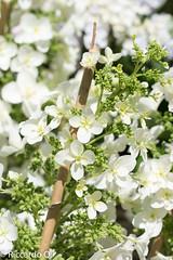 _DSC9179.jpg (Riccardo Q.) Tags: macro fiori fiore altreparolechiave floreka