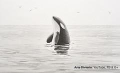 Cmo dibujar una Ballena Orca (artedivierte) Tags: arte dibujo lapicero leonardopereznieto ballenaorca artedivierte artistleonardo