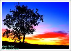 el alto (joxe@n) Tags: espaa contraluz arbol paisaje nubes otoo puestadesol salamanca nikkor ocaso ramas laalamedilla aybalaostia joxen joxennikon nikond5200 joxenfoto joseantonioandresgomez