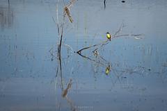Esperando (Diego Serra) Tags: bird water rio river ave hunter pescador cazador
