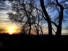 Eery Trees in front of a glorious sunset in Manston, Kent, UK. (Tiffany - Angle Eaton) Tags: uk trees sunset england kent country manston