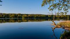 Rusaka (Giannis Samartzis) Tags: blue sky lake reflection green water nikon poland polska 1855 poznan d60 rusaka jezioro