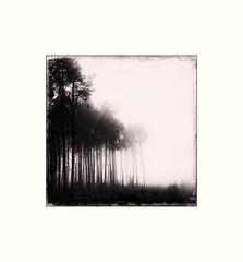 (Paul Evans.) Tags: trees bw white mist black tree fog mono guisborough myst