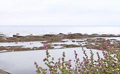 IMG_3358 (-Morgane-) Tags: ocean sea france nature landscape outdoors photography seaside sand rocks sion vende