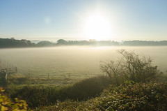 early morning in england (sixthofdecember) Tags: greatbritain morning travel light england sky sun nature field sunshine fog sunrise landscape outside outdoors countryside early bush nikon europe unitedkingdom sunny tamron bushes shrubbery tamron18270 nikond5100