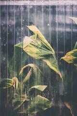 greenhouse effect (ResiSambesi) Tags: botanischergartenmainz greenhouseeffect greenhouse gewächshaus treibhaus tropical plants blur raindrops regentropfen verticallines green mainz botanischergarten botany niftyfifty canoneos650d 50mmf18 hothouse haze