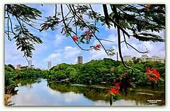 Capibaribe bairro da Torre Recife