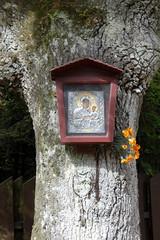 tree madonna (kexi) Tags: tree trunk kapliczka madonna virginmary shrine dbki pomorze pomerania polska poland canon june 2015 catholic religious vertical dissymmetry instantfave