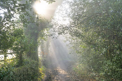 April morning 3 (bingleyman2) Tags: morning trees mist spring woods path atmosphere sunburst