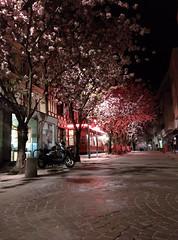 IMG_20150418_230224 (edelvia14) Tags: fleurs rouen printemps floraison