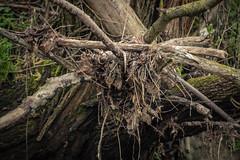 150502-IMG_0531 (matthiaskunz) Tags: bird birds spring nest ammer 2015 ammertal