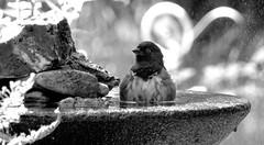 Bird Bath 8