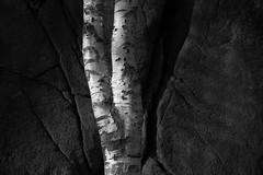 20150404-DSC02636 (Kristine Bergheim) Tags: storesand grimstad fevik