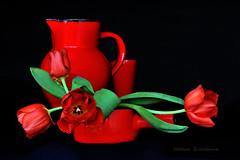 1-2-3  et 4 tulipes.......rouges (Hélène Quintaine) Tags: nature fleur composition rouge pistil pot vase printemps pétale feuille tulipe naturemorte création tige broc calice étamine