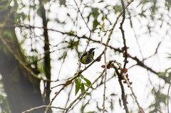 150502-IMG_0552 (matthiaskunz) Tags: bird birds spring ammer 2015 ammertal
