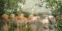 pink trees lake birds misty reflections flamingo feathers vegetation dreamy ghosting dances twoimagesinone ipiccytexture