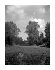 Zeiss Ikon  Nettar 515_001 (dcanalogue) Tags: camera white black classic film nature zeiss vintage landscape countryside kodak tmax country rangefinder f45 developer carl medium format 100 filmcamera ars 6x45 ikon folding 515 tmy fd imago nettar anastigmat classicblackwhite 100tmy analogicait