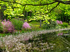 The pond in Springtime (1 of 1) (LarryJ47) Tags: flowers trees flower color green water leaves spring pond fuji farm fujifilm x10 fujix10